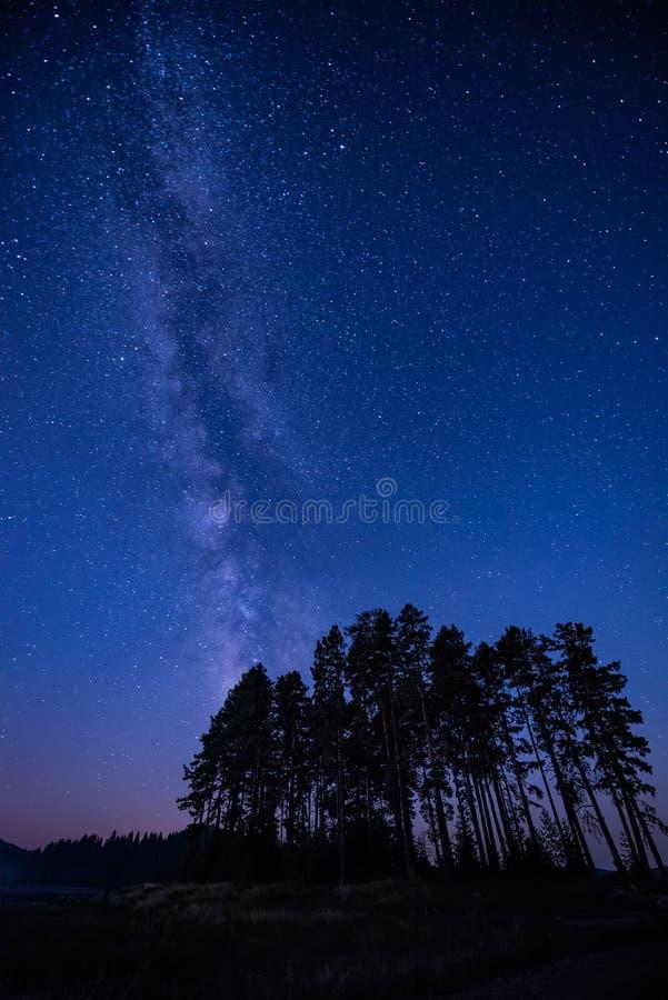 Via Lattea sopra gli alberi immagine stock