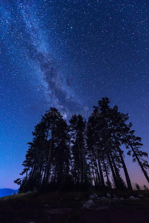 Via Lattea sopra gli alberi fotografia stock libera da diritti