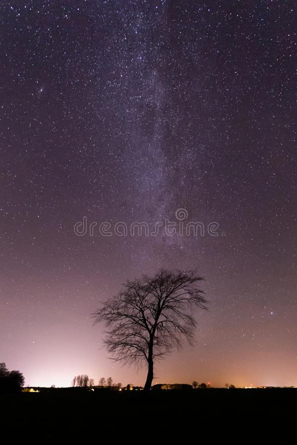 Via Lattea sopra l'albero solo in Svezia immagini stock