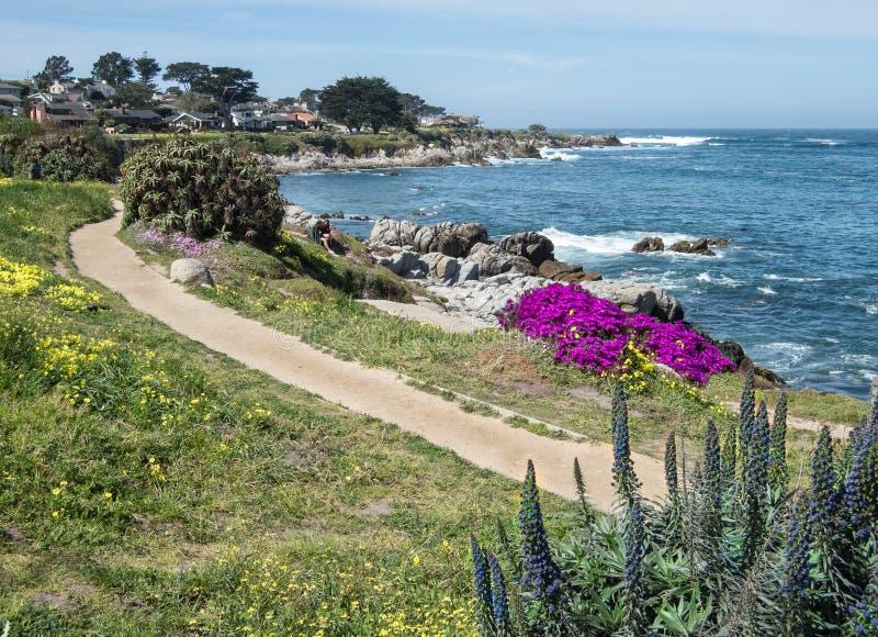 Via lungo il boulevard di vista di oceano, boschetto pacifico fotografia stock libera da diritti