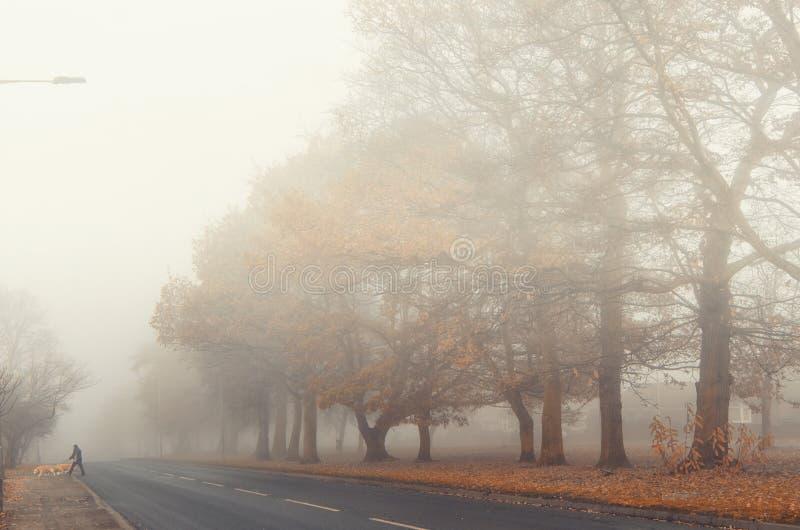 Via nebbiosa nella città fotografie stock libere da diritti
