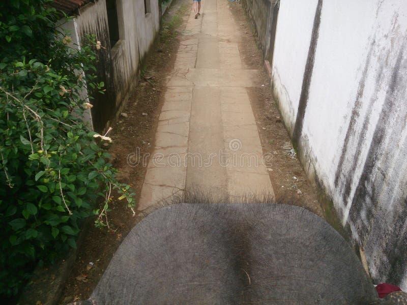 Download Via Nello Sri Lanka E La Testa Di Un Elefante Immagine Stock - Immagine di elefante, sopra: 117981817