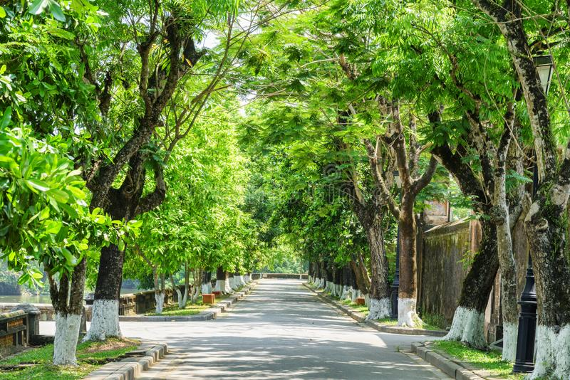Via ombreggiata verde meravigliosa alla città imperiale, tonalità, Vietnam immagine stock