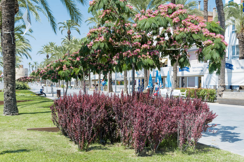 Via principale con le palme ed i fiori nel geltrú della La di Vilanova i, dorada della Costa fotografie stock