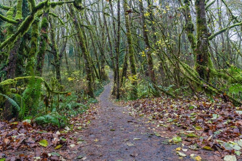 Via scenica nella foresta fotografie stock libere da diritti