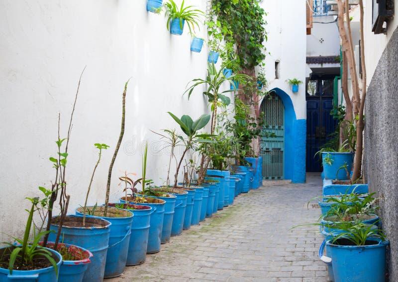 Via stretta con le piante da appartamento in Medina Tangeri, Marocco fotografia stock