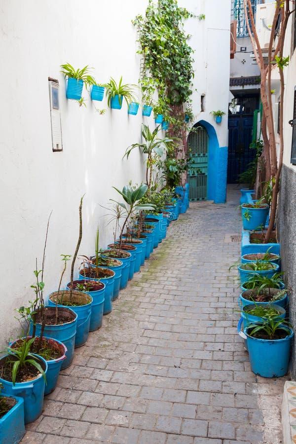 Via stretta con le piante in Medina Tangeri, Marocco fotografia stock libera da diritti