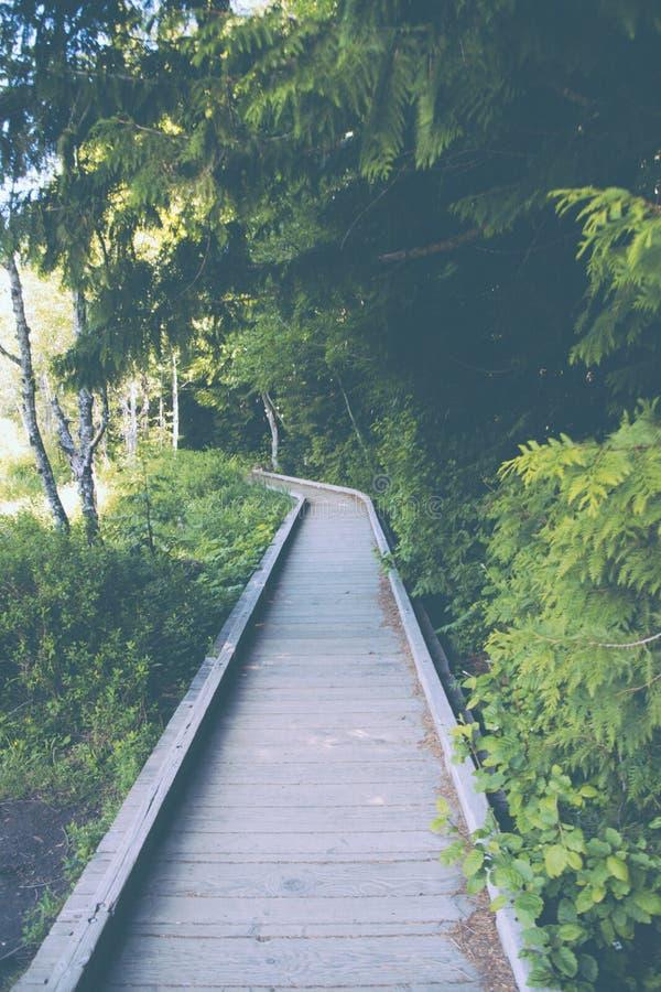 Via stretta di legno handbuilt in un terreno foresty verde immagine stock libera da diritti