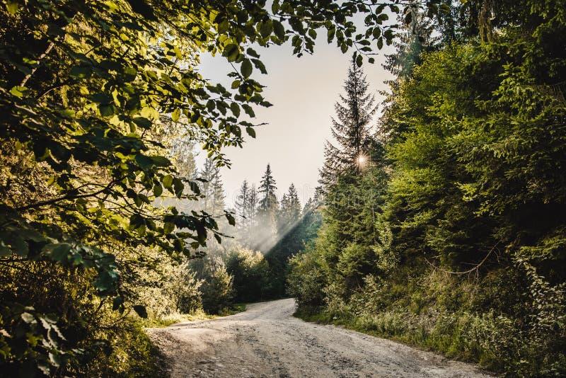 Via in una foresta fotografie stock libere da diritti