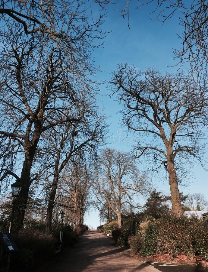 Via vuota della natura durante l'inverno con cielo blu immagini stock