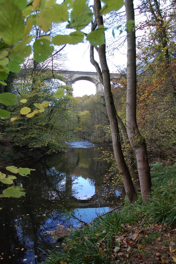 Viaduto da floresta perto de Morpeth Northumberland fotos de stock