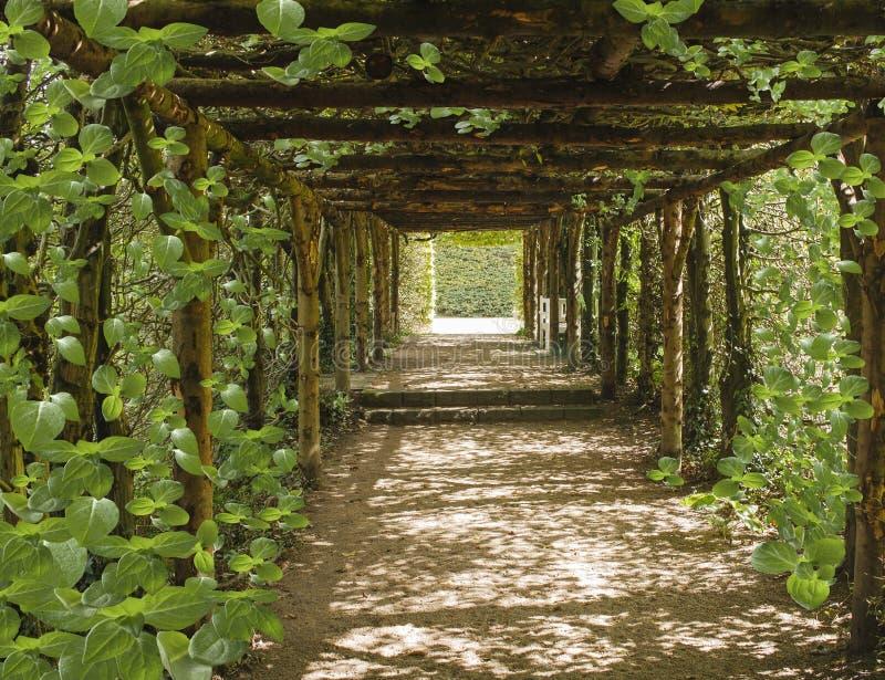 Viagem da alma Túnel bonito feito das árvores imagem de stock royalty free