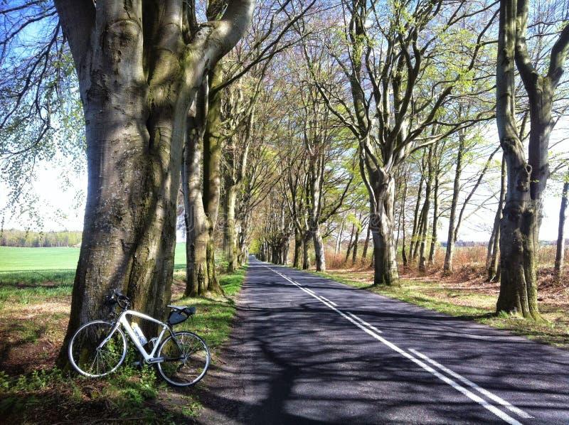 Viagem da bicicleta no Polônia Aleia da faia perto de Naclaw imagem de stock