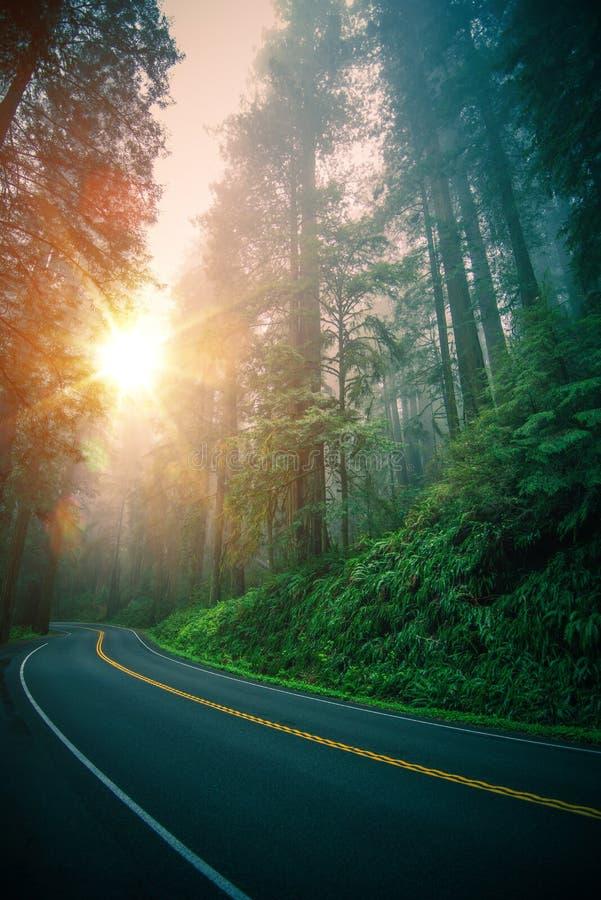 Viagem da estrada da sequoia vermelha foto de stock royalty free