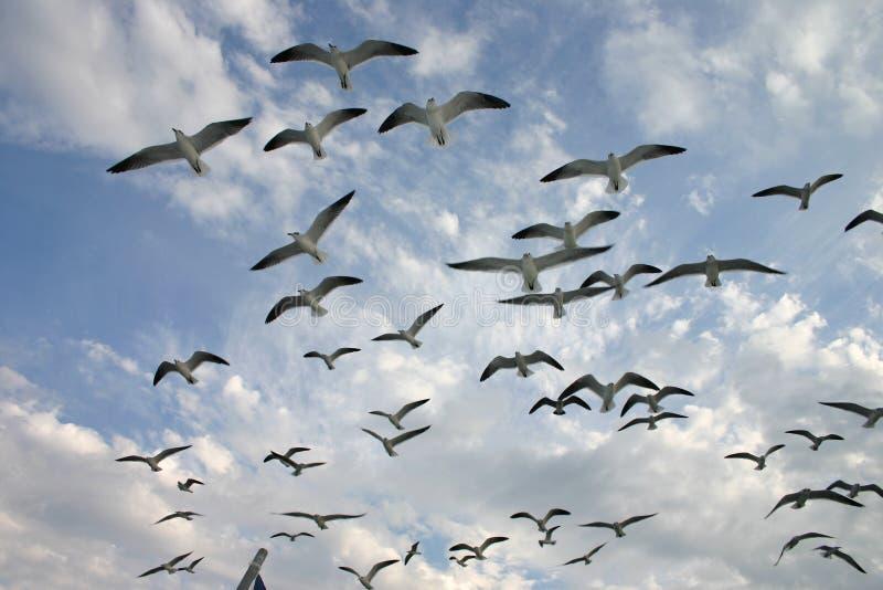 Viagem da gaivota imagem de stock
