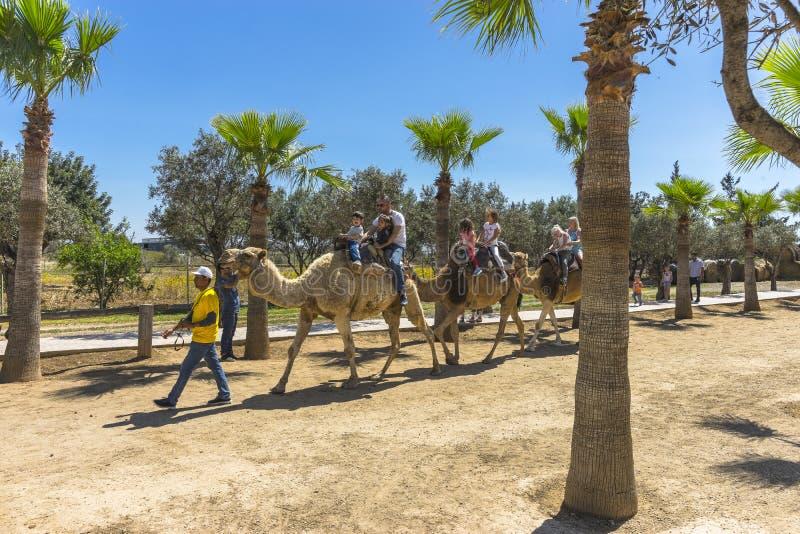 Viagem do camelo na ilha de Chipre fotos de stock