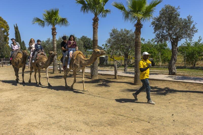 Viagem do camelo na ilha de Chipre foto de stock