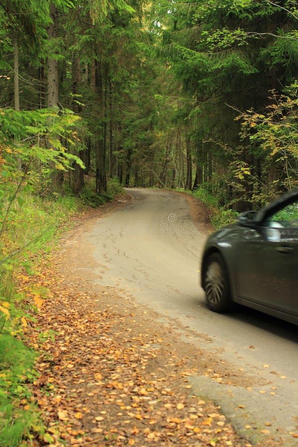 Viagem do carro em uma estrada de floresta surpreendente imagem de stock