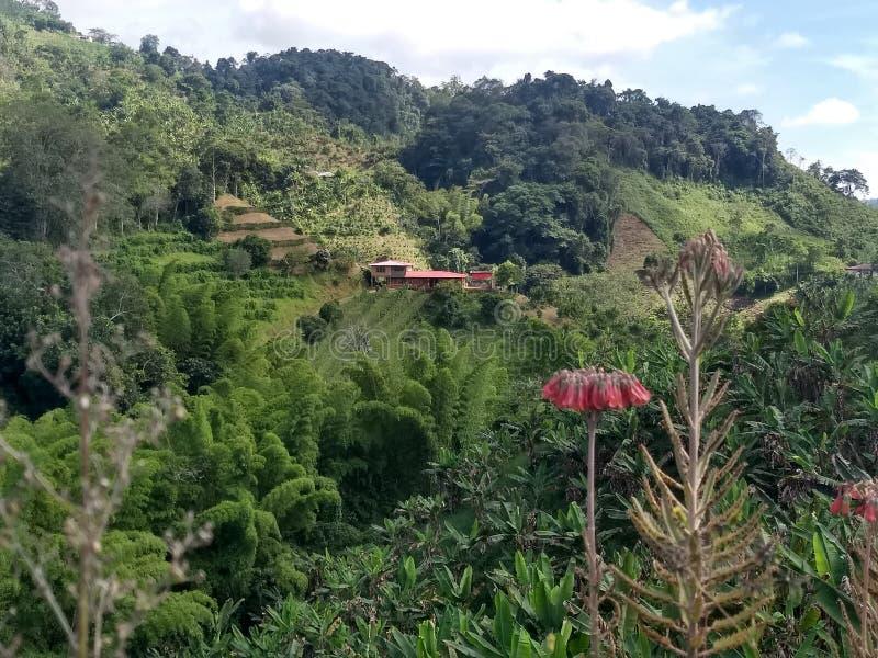 Viagem em montanhas do café de Colômbia imagem de stock