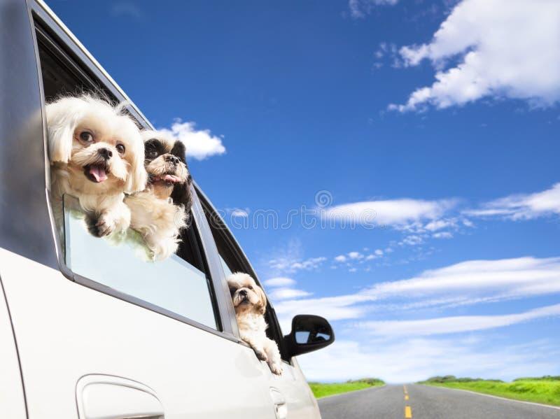 Viagem por estrada de viagem da família de cão fotografia de stock royalty free