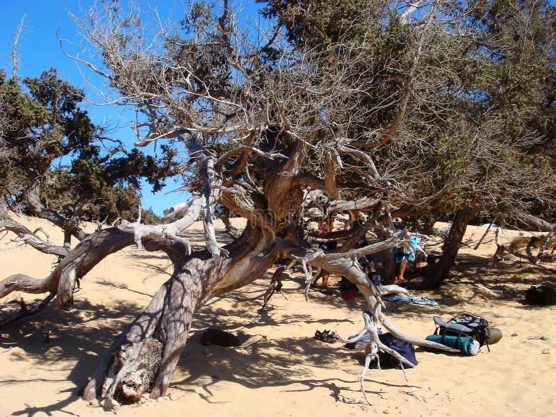Viagem por estrada grega do verão da ilha de Gavdos de Agios Giannis a Tripiti e de volta aos detalhes de surpresa da praia fotografia de stock