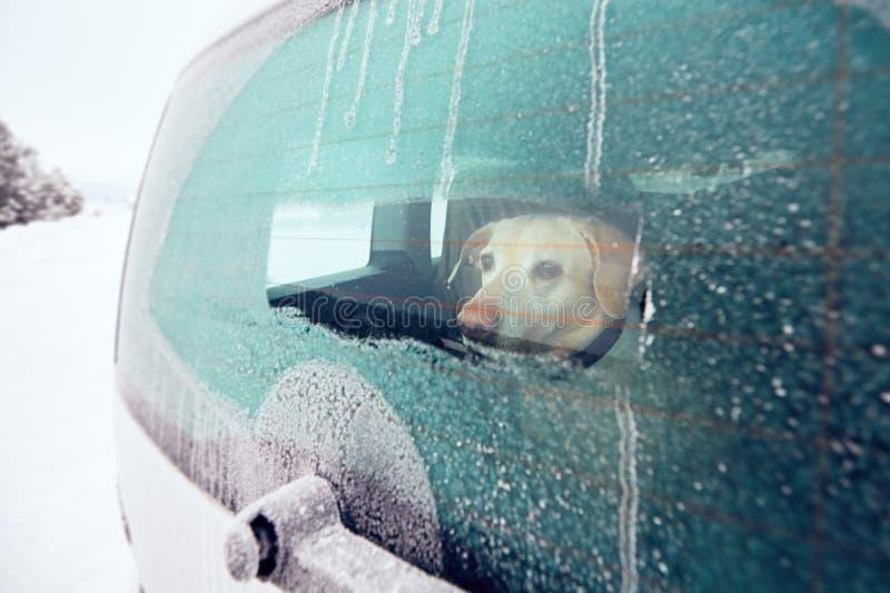Viaggiando con il cane immagini stock libere da diritti