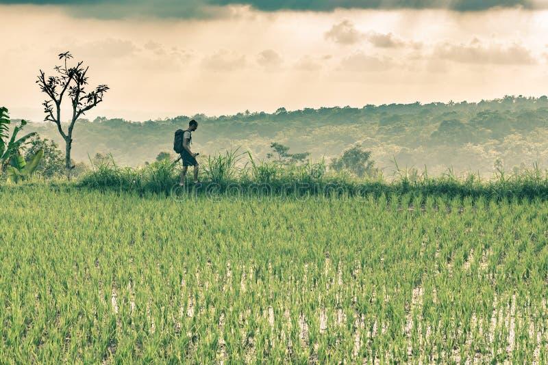 Viaggiatore con zaino e sacco a pelo che cammina fra le risaie un giorno nuvoloso retro colori di tonalità fotografia stock