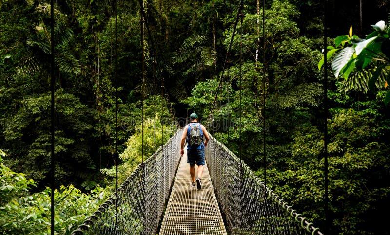 Viaggio alla giungla fotografie stock libere da diritti