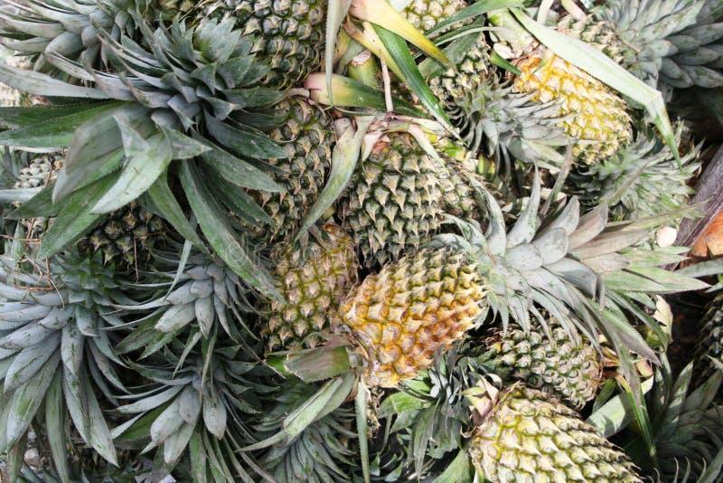Viaggio in Asia: ananas fotografia stock