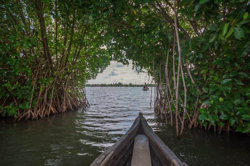 Viaggio della canoa attraverso la foresta della mangrovia nell'isola di Munroe immagine stock