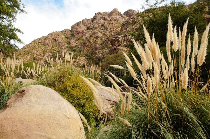 Viaggio di Rio Colorado del di Cascadas fotografia stock