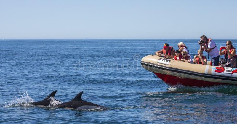 Viaggio di sorveglianza della barca del delfino nell'Algarve fotografia stock libera da diritti