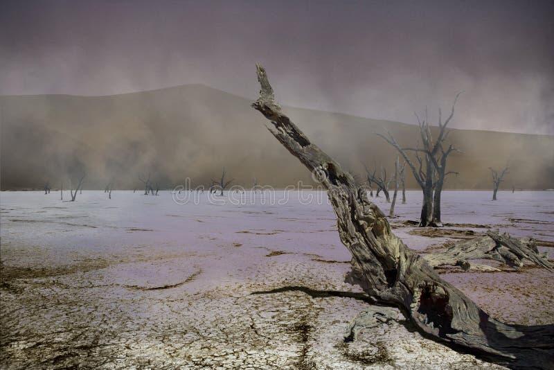 Viaggio in Namibia dal deserto di namib al pensionante dell'Angola immagine stock libera da diritti