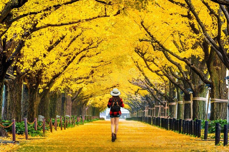 Viajante da mulher com trouxa que anda na fileira da árvore amarela da nogueira-do-Japão no outono Parque do outono no T?quio, Ja imagem de stock