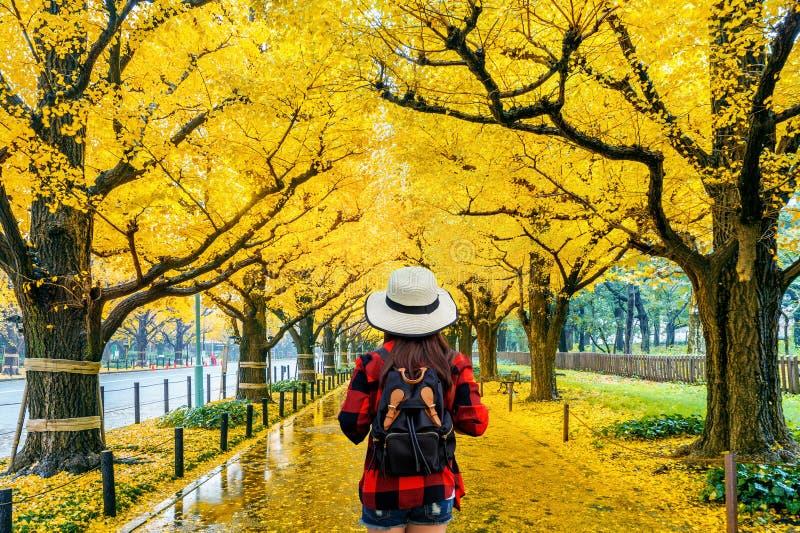 Viajante da mulher com trouxa que anda na fileira da árvore amarela da nogueira-do-Japão no outono Parque do outono no T?quio, Ja imagem de stock royalty free