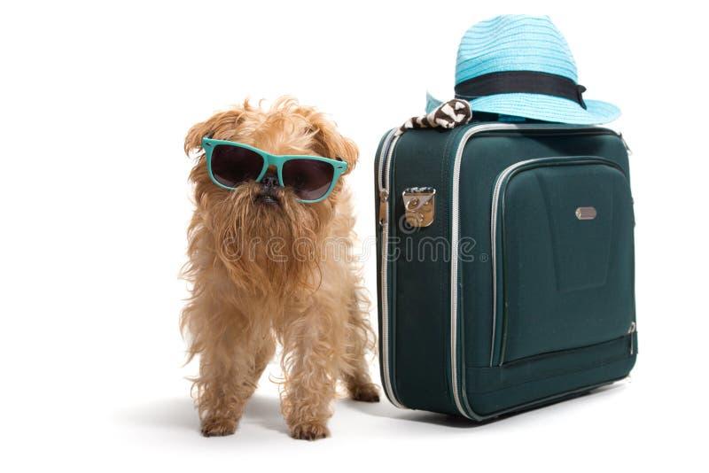 Viajante do cão imagem de stock royalty free