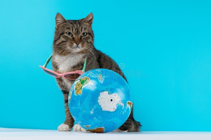 Viajante do gato o gato encontra-se em férias foto de stock