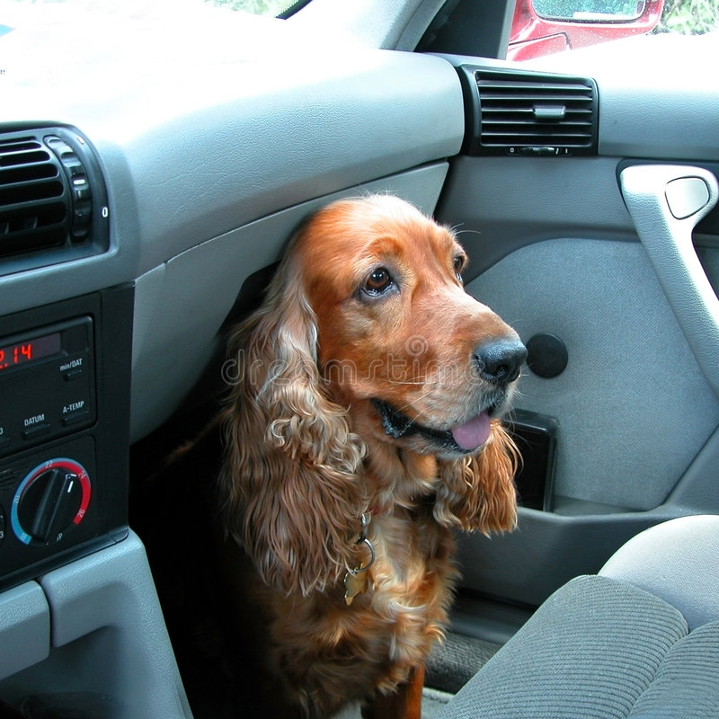 Viajará - o cão foto de stock