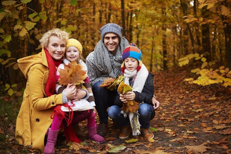 Viaje al bosque durante el otoño imágenes de archivo libres de regalías