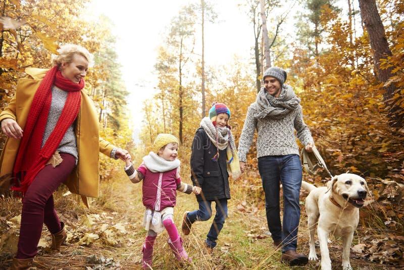 Viaje al bosque durante el otoño foto de archivo libre de regalías