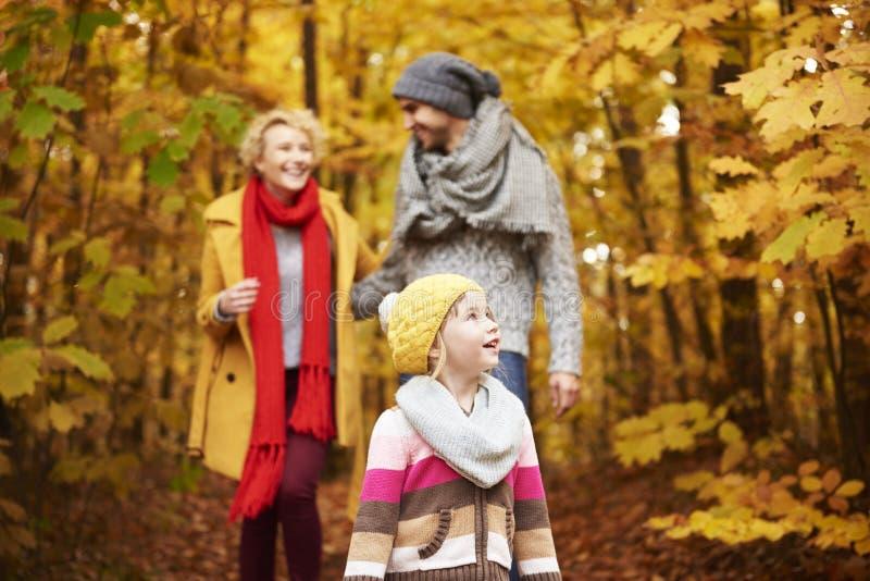 Viaje al bosque durante el otoño fotos de archivo