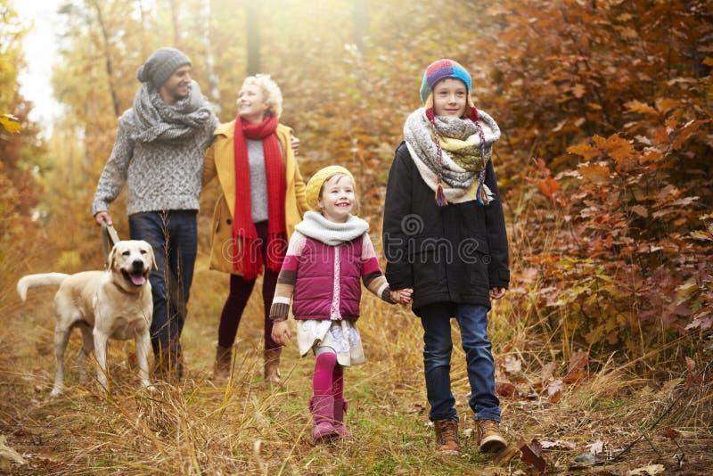 Viaje al bosque durante el otoño imagen de archivo libre de regalías
