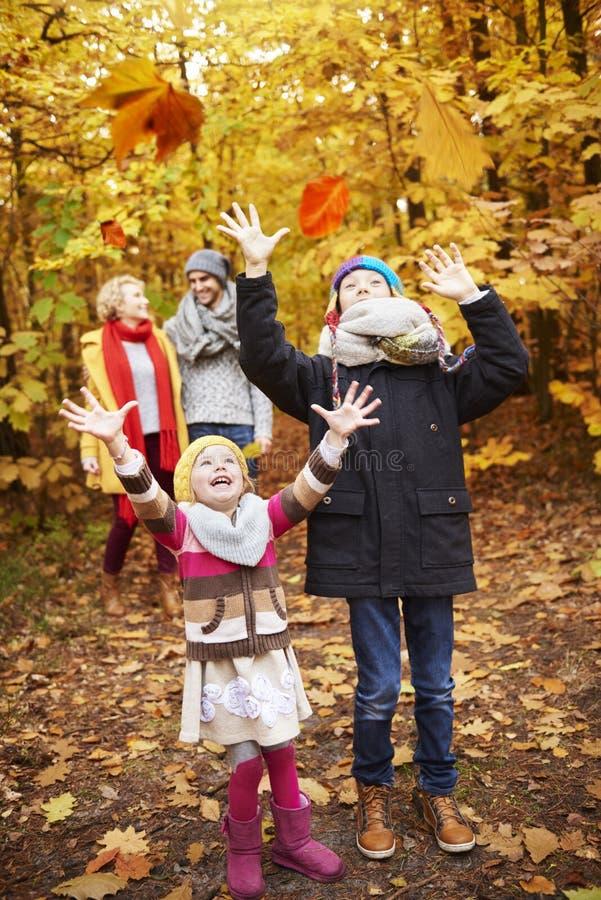 Viaje al bosque durante el otoño fotos de archivo libres de regalías