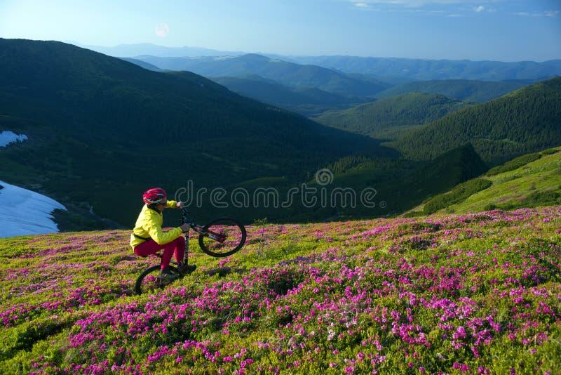 Viaje con la flor Cárpatos foto de archivo