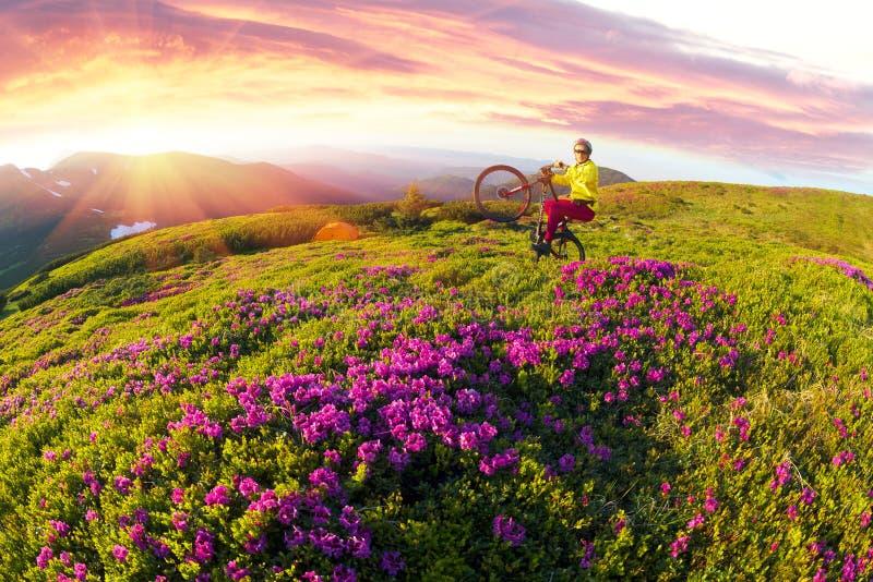 Viaje con la flor Cárpatos foto de archivo libre de regalías