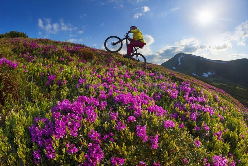 Viaje con la flor Cárpatos imagen de archivo libre de regalías