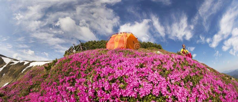 Viaje con la flor Cárpatos fotografía de archivo libre de regalías
