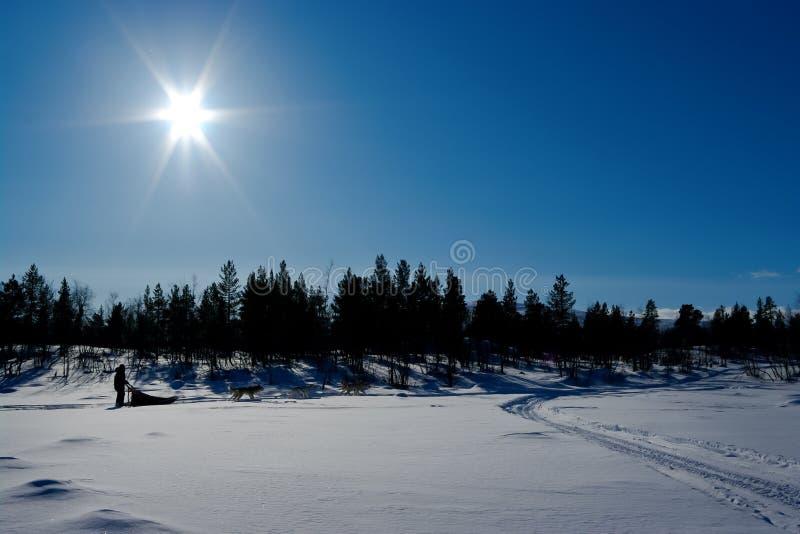 Viaje de Deogsledding en Escandinavia norteña fotos de archivo