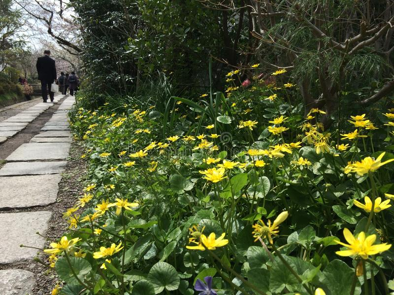 Viaje de Kyoto Kansai Japón de la flor de la trayectoria imagen de archivo