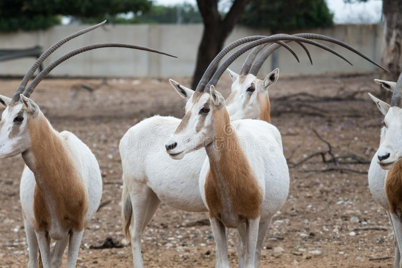 Viaje de la mañana en Ramat Gan Safari Park foto de archivo